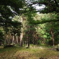 В лесу :: Надежда