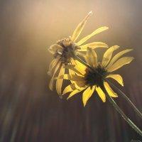 Искупаться в солнечных лучах :: Лидия Цапко