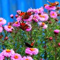 Осенние цветы. :: Борис Митрохин