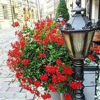 Фонарь и цветы :: Galina Belugina