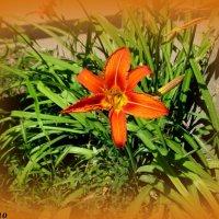 Оранжевое лето :: Нина Бутко