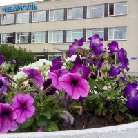 Городские цветы :: Марина Шанаурова (Дедова)