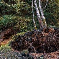 Прогулка в лесопарк 5 :: Сергей Филатов