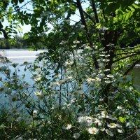 У реки... :: Galina Dzubina