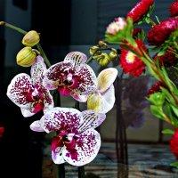 розы. астры орхидеи :: Александр Корчемный