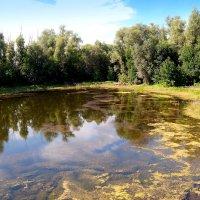 Заросший пруд.. :: Андрей Заломленков