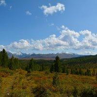На Улаганском перевале. :: Валерий Медведев