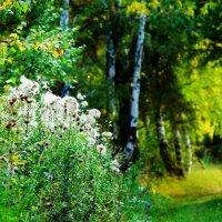 Осень на пороге :: Сергей Царёв
