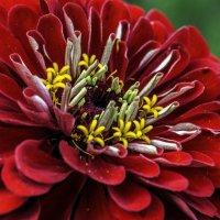 Аленький цветочек :: Tatiana Poliakova