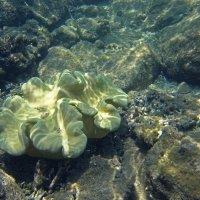 Коралловый цветок :: Екатерина Ульянцева