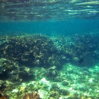 Подводный пейзаж :: Екатерина Ульянцева