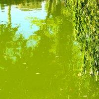 Озеро в центре города (Луганск, ЛНР, Парк им. 1 Мая) :: Наталья (ShadeNataly) Мельник