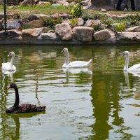В зоопарке Vinpearl land :: Сергей Бойко