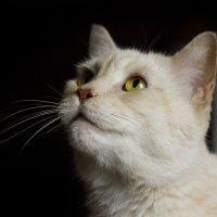 просто кот :: Елена Волгина