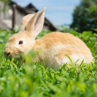Псс, тащи морковку :: Alex Bush