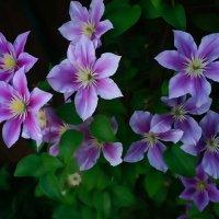 Цветочки :: Ксения Черных