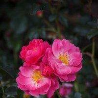 « Цветы нам дарят настроенье, И пробуждают вдохновенье,…» :: Андрей Нибылица