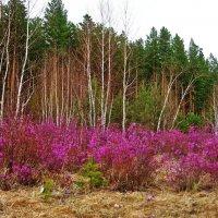 забайкальская весна :: Надежда Мельникова