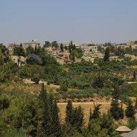 террасный парк в Иерусалиме :: Александра