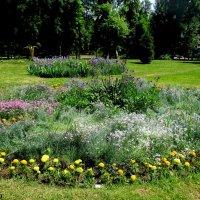 Клумба в парке :: Нина Бутко