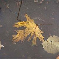 Плавали в лужах опавшие листья... :: Нина Корешкова
