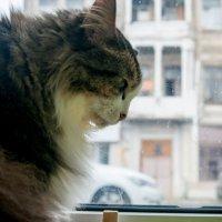 Котик на окне :: Albina