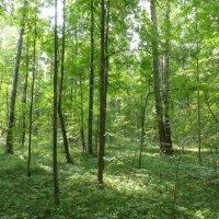 Юдинский лес 3 сентября  2017 :: Наиля