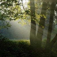 В утреннем свете..... :: Юрий Цыплятников