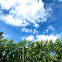 Небо :: Алиса Тимченко
