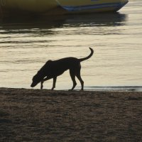 пёс и море :: tgtyjdrf
