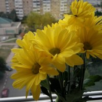 Осенний букет. :: Serg