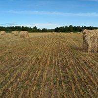 На сельском поле :: Leonid Rutov