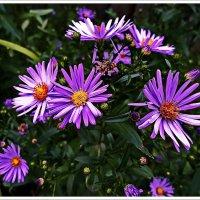 Осенние цветы :: Любовь Чунарёва