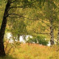 Средь березок затерялось озеро лесное :: Татьяна Ломтева
