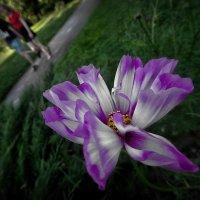 Цветок в парке 40. :: Василий Ярославцев