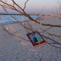 The Box - пляж эмоций. За ночь деревья там у моря вырастали... :: Александр Резуненко