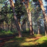 С августом прощаются леса... :: Лесо-Вед (Баранов)