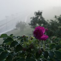 Туман 4 :: Людмила Цвиккер