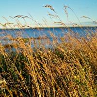 белое  море :: Валерия Воронова
