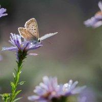 Моя послушная бабочка :: Елена Ахромеева