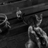 голодный котенок :: Dmitriy Predybailo