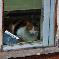 Старое окно :: Дон Пионеро Карбонариевский