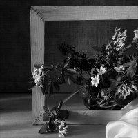 Полевые цветы. :: Валерия  Полещикова