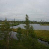Сибирь :: Ксения Протасова