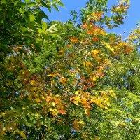 Осень , осень , осень . :: Мила Бовкун