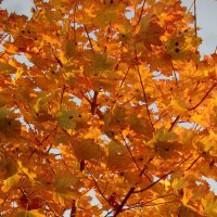 Царство осеннее, золото листьев... :: Владимир Павлов