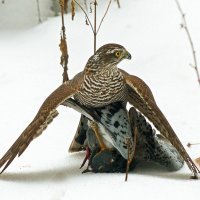 Удачливая охотница :: Александр Запылёнов