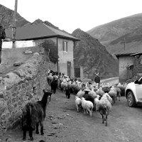 Пастух :: Александр Пиленгас