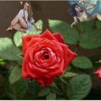 Розы любьви_1 :: irina Schwarzer