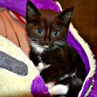 Котёнок. :: Михаил Столяров